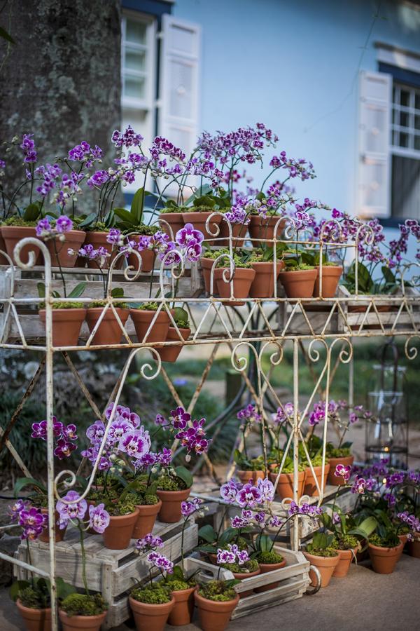 Orquídeas em Vasos de terracota para lembranças