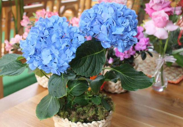 vaso de hortênsias - decoração
