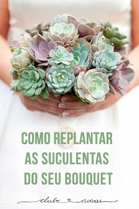 Como replantar as suculentas do seu bouquet